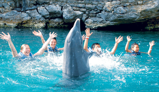 Cancun Swim With Dolphins